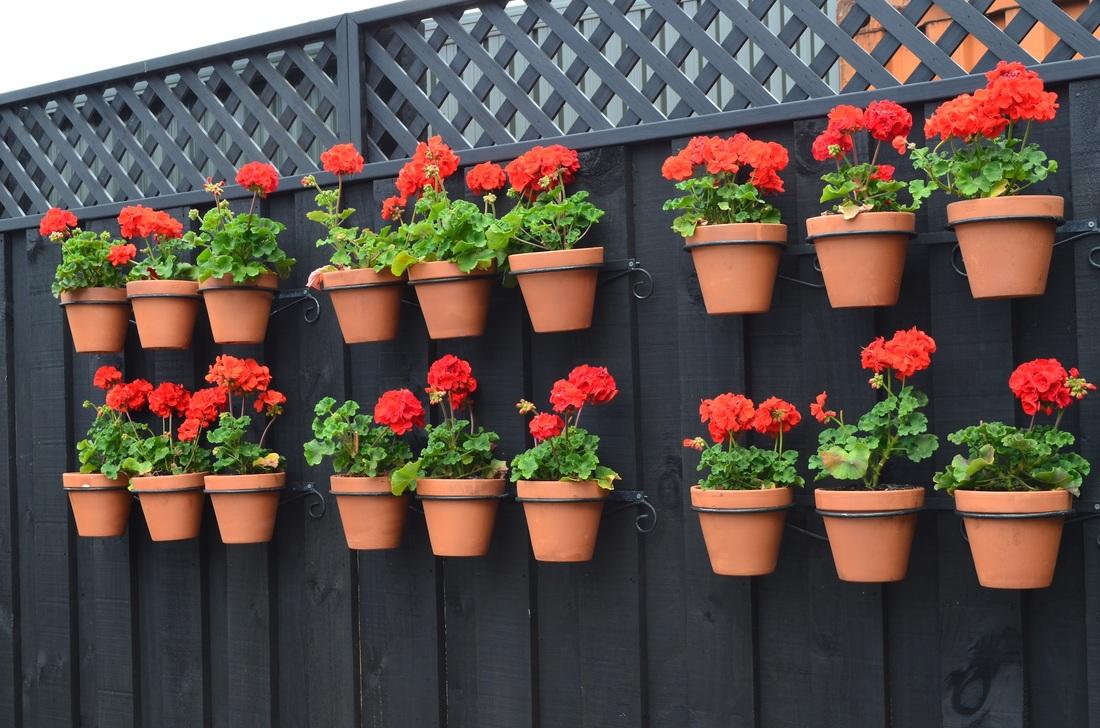 Amazing Gardening Tips
