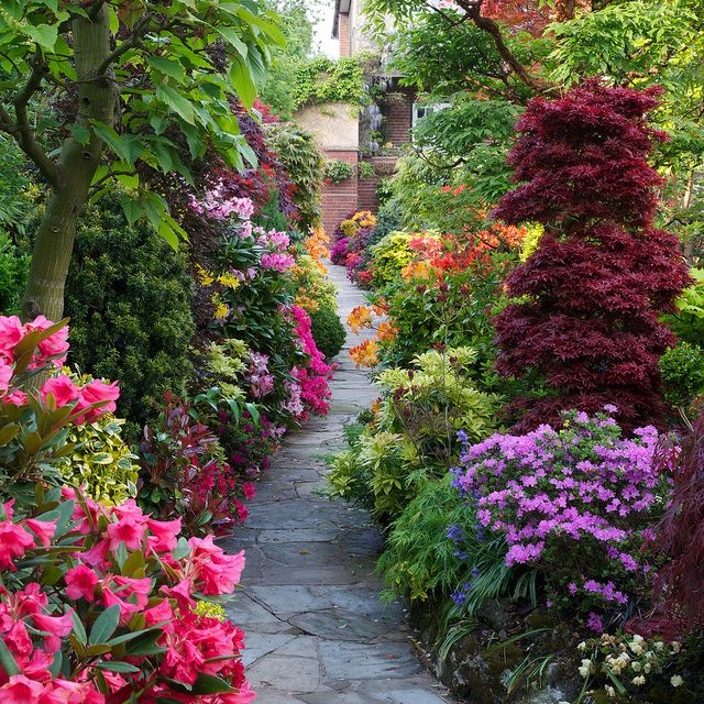 Beautiful Garden Flowers