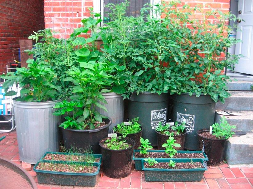 Garden Container Image
