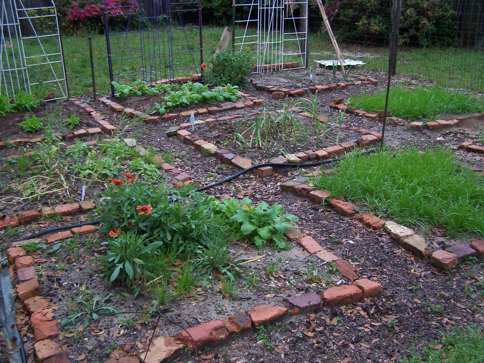 Garden Layout Idea