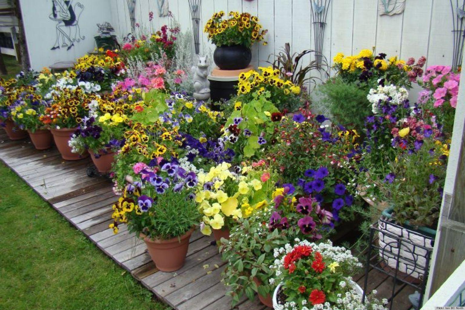 Garden Plant Idea