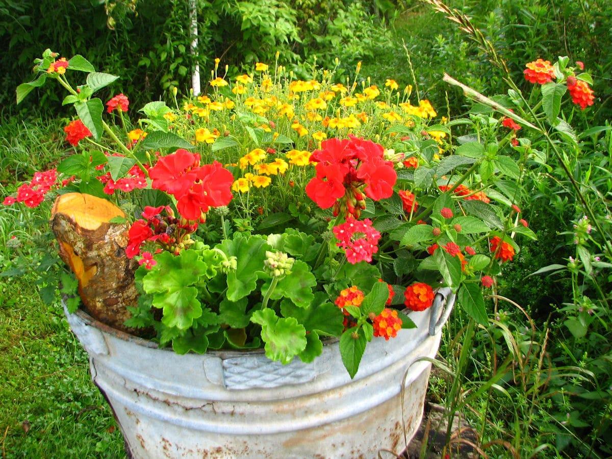 Garden Plant Picture