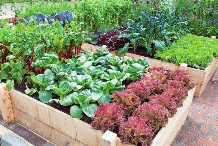 Garden Tips Idea