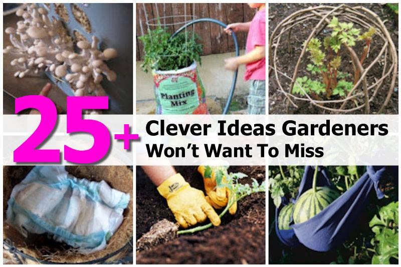 Gardening Tips Image