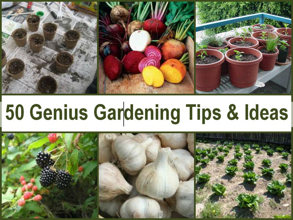 Gardening Tips Picture