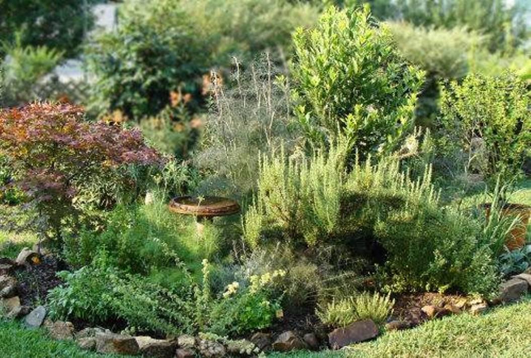 Herb Garden Design Layout