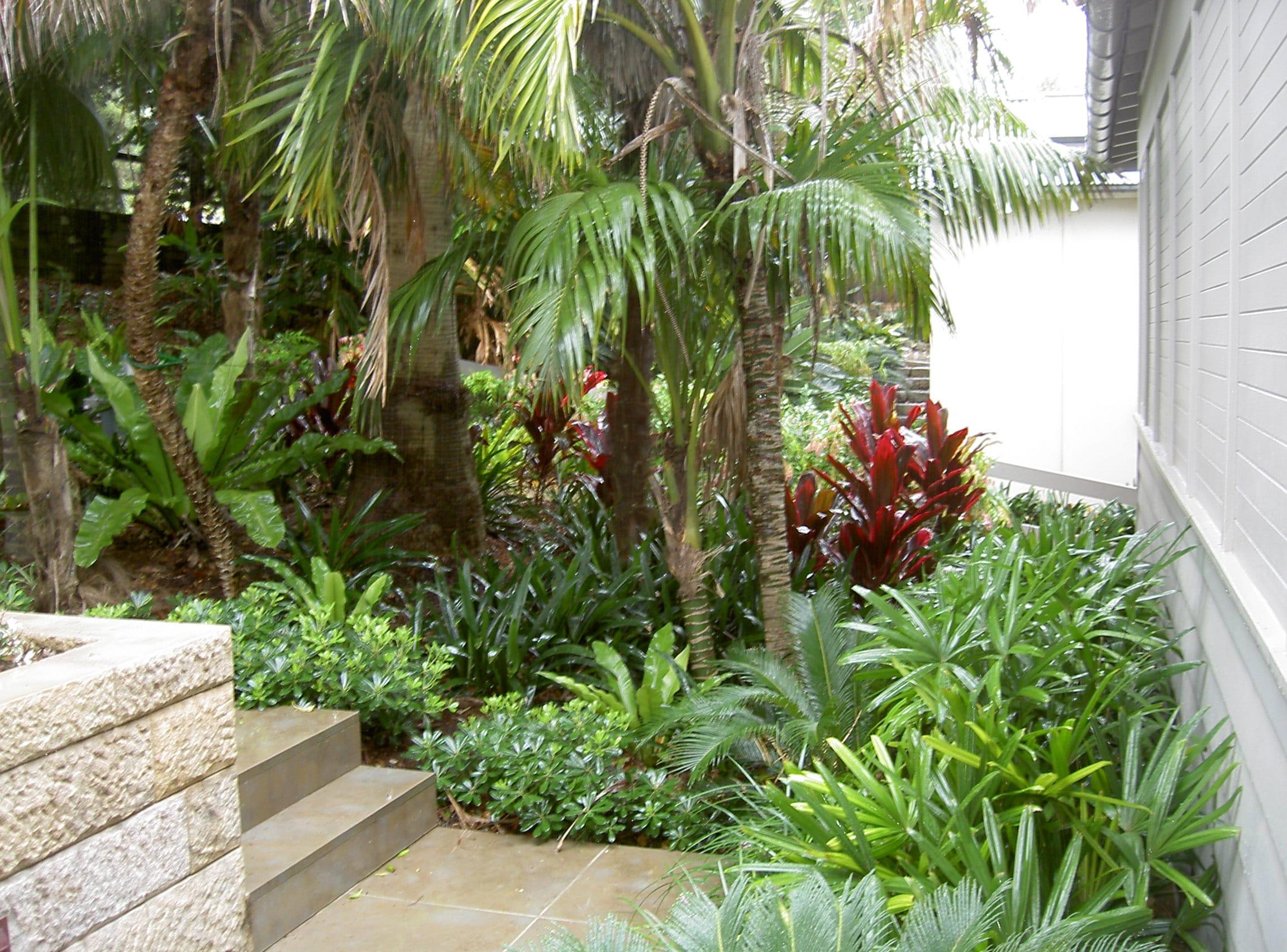 Latest Tropical landscape