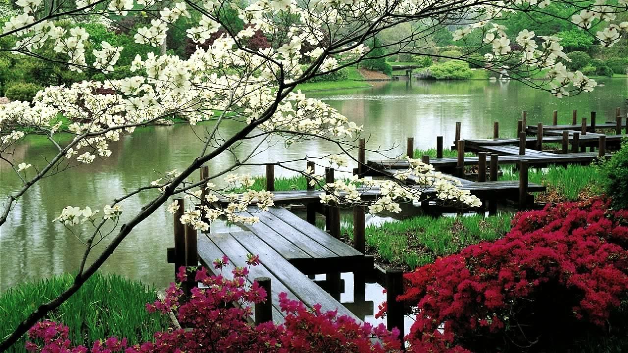 Latest Zen Garden