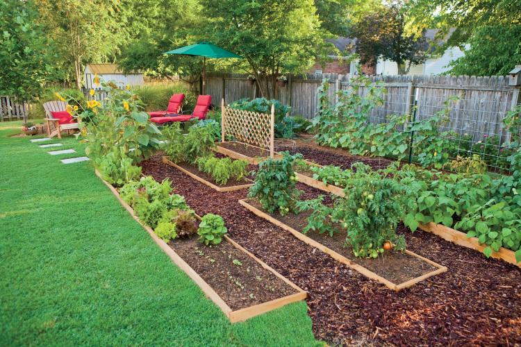Online Backyard Garden Idea