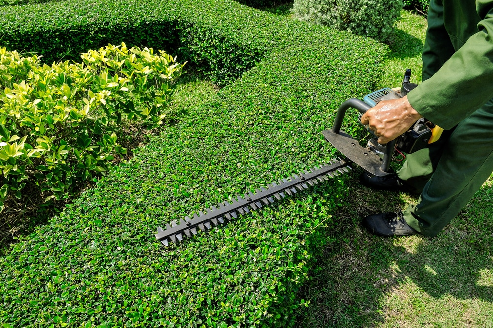 Save Landscape Maintenance