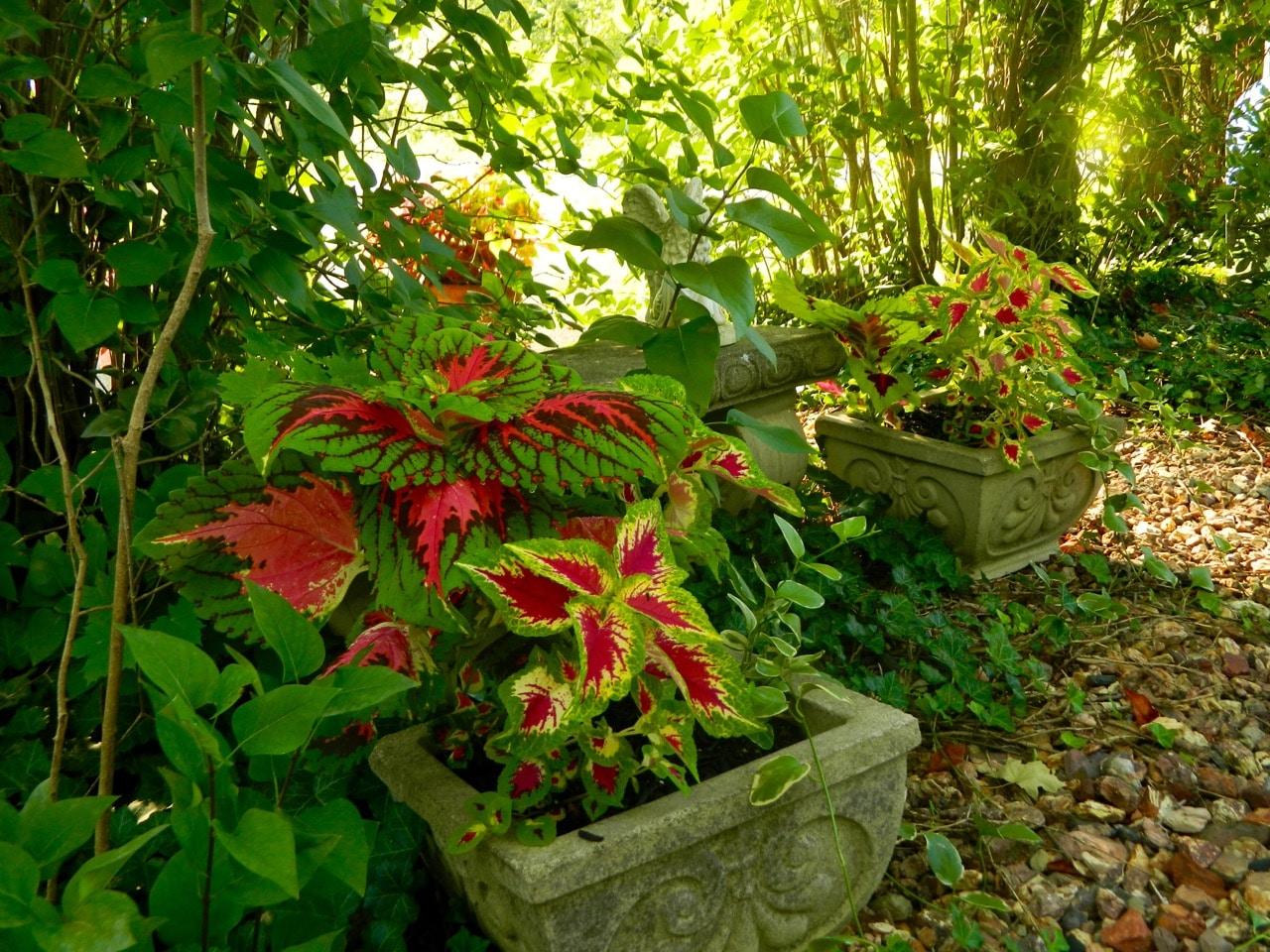 Simple Garden Plant