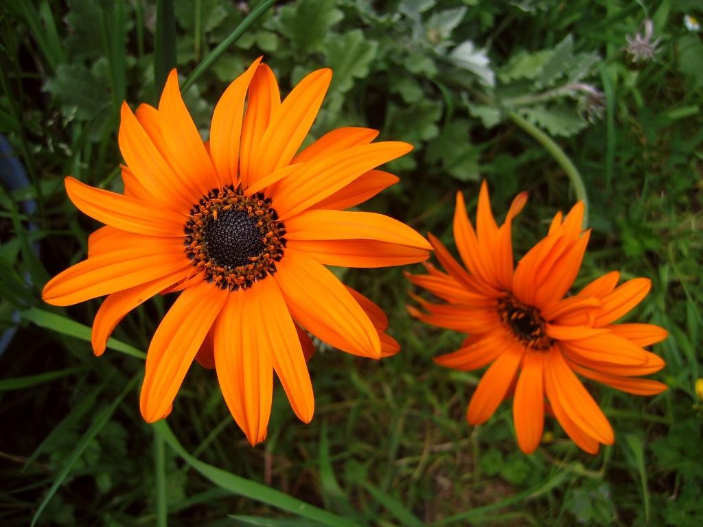 Sun Flowering Plant
