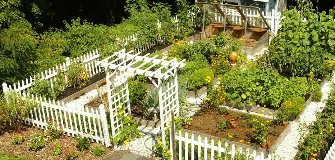 Unique Vegetable Garden Idea